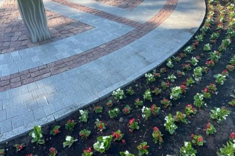Vasaras ziedi nomainījuši atraitnītes