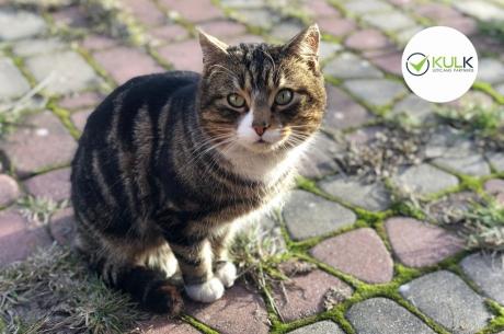"""""""Kulk"""" ziedojis līdzekļus vismaz 60 bezsaimnieka kaķu sterilizācijai"""